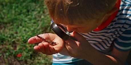 Intriguing Invertebrates tickets