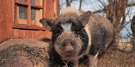 Pig Education and Proper Handling Seminar tickets