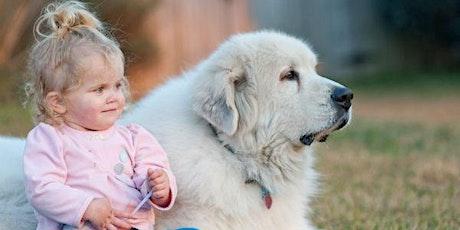 Dog Meets Baby Seminar Via ZOOM tickets