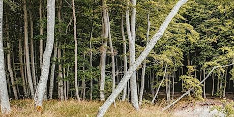 Tree Survey & Inspection (LANTRA certificate of attendance) Nov '21 tickets