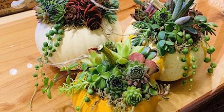 Mini Succulent Pumpkin Trio @Rustic Cork tickets