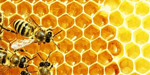 EUROPEAN BEE WEEK 2015 - NEW CHALLENGES FOR BEES: THE...