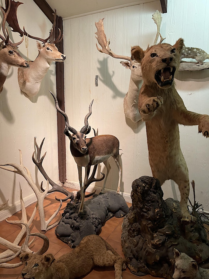 SPIRIT OF THE STAG DINNER IN THE TAXIDERMY DEN image
