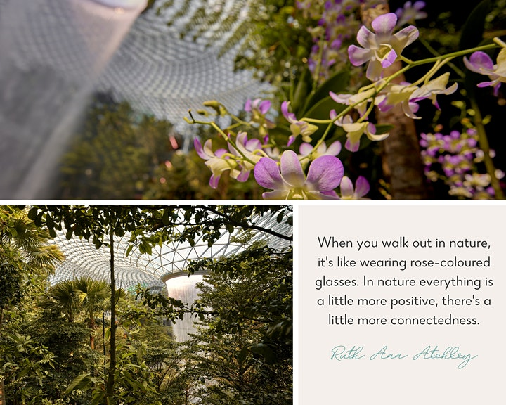 Mornings in the Woods: a forest bathing journey @ Shiseido Forest Valley image