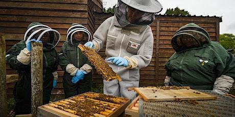 Beginners Beekeeping Course July 2022 tickets