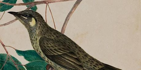 Birds in art sketch tour with Paul Sloan tickets