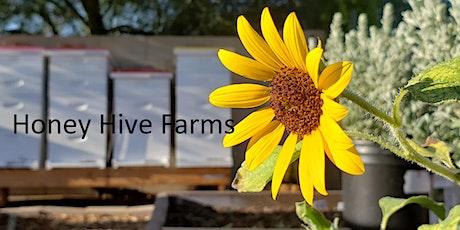 Beekeeping 101, Honey Hive Farms Hands on Beekeeping Class / Honey Tasting tickets