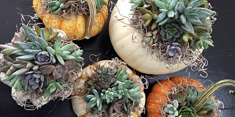 Sips + Succs: Succulent Pumpkin Centerpieces (10am) tickets