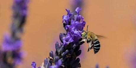 Retford Park: Native bee workshop tickets