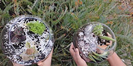STEM - Science of Terrariums, Echeveria and Moss tickets