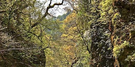 Autumn Landscape Photography tickets