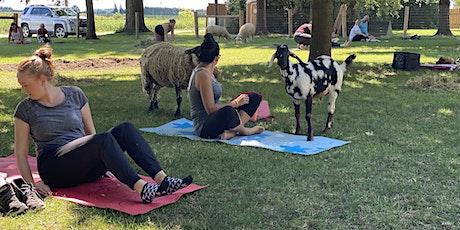Goat Yoga & Tour Sunday September 19 at 1130am tickets
