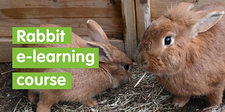 Rabbit e learning course - self led tickets