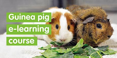 Guinea pig e learning course - self led tickets