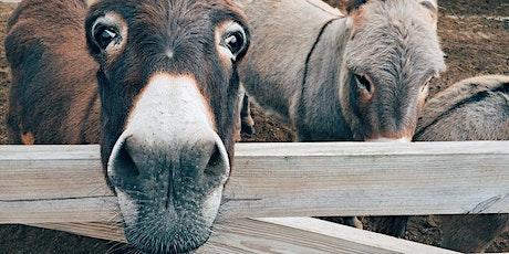 Balade au pas des ânes billets