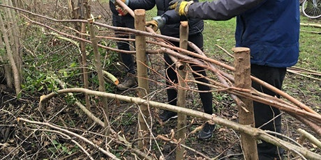 Hedgelaying at Kingston University - Tolworth Court Sports Ground tickets