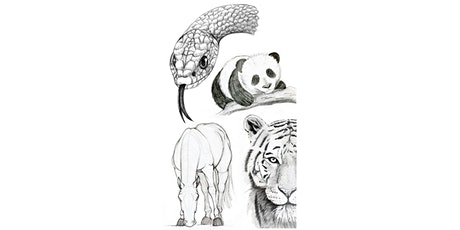 60 Min Animal Sketching Club: 4 Week Series Tuesdays @ 5PM PST tickets