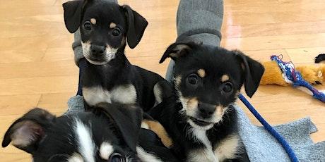 10/12/21 Online Dog Foster Orientation tickets