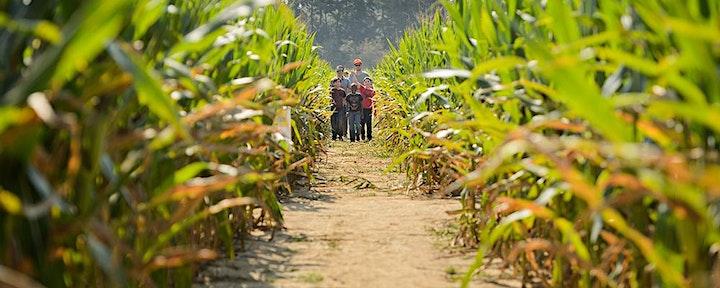 Corn Maze at Burden 2021 image