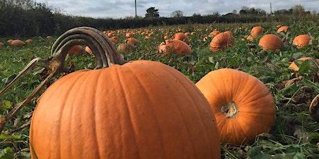 Pumpkin Patch tickets