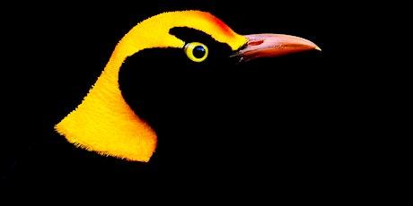 Bird's Eye View Photography Workshops tickets