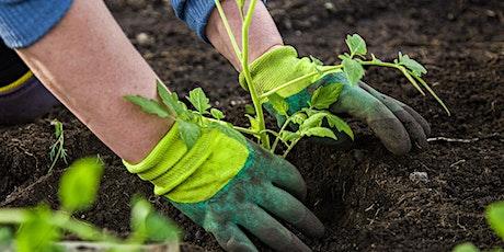Spring into gardening: Preparing for a summer veggie crop tickets
