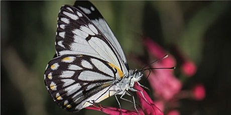 Spring into gardening: Balconies for biodiversity tickets