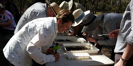 Waterbug Discoveries on the Barwon River - Geelong Nature Forum tickets