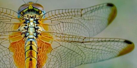 Workshop: Sustainable innovations through biomimicry: Nature as a teacher tickets