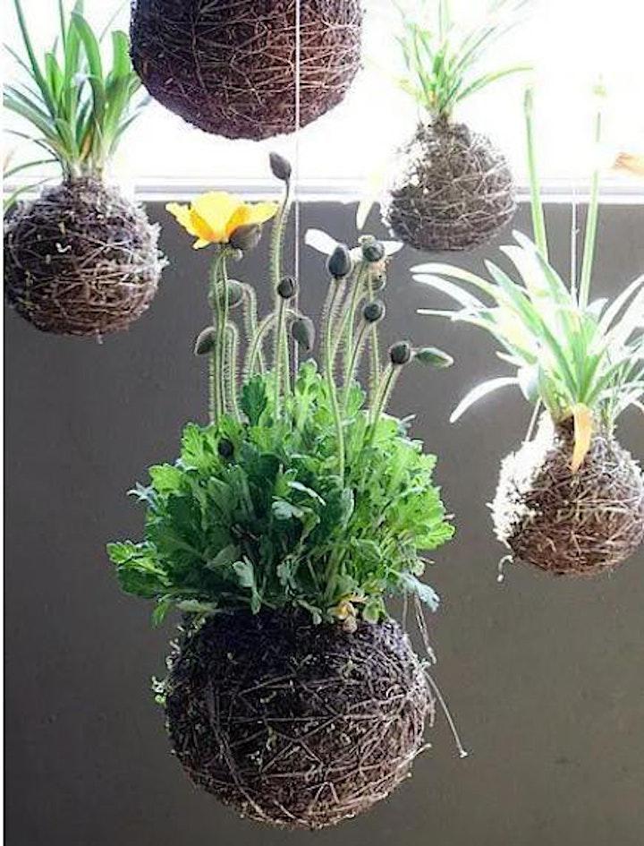 Immagine Crea il tuo kokedama: l'arte giapponese delle piante senza vaso