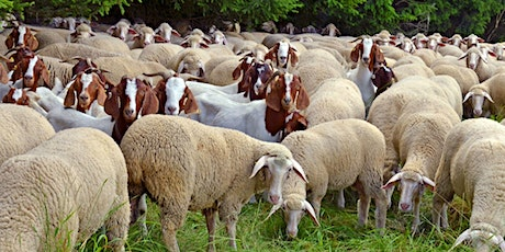 2021 Small Ruminant Workshop tickets