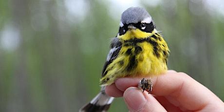 Songbird Banding at the Beaverhill Bird Observatory tickets