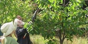 Summer Fruit Tree Pruning Workshop