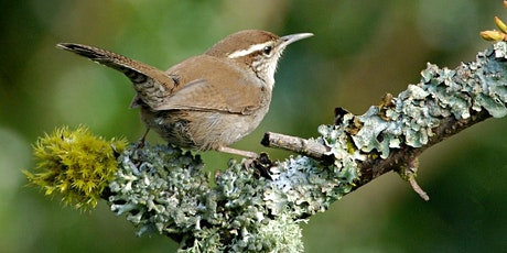 Fall Birding with Libby Mills tickets