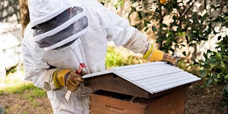 Lake Mac STEAM Week: Advice for Aspiring Bee Keepers tickets