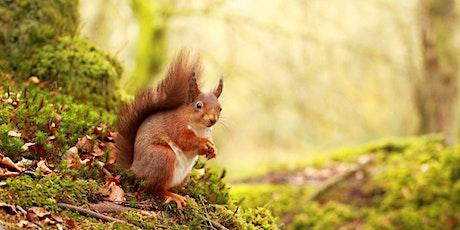 Red Squirrel Walk – Red Squirrel Awareness Week tickets