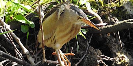Monitoring Rare Breeding Birds in the UK tickets