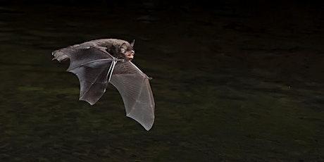 Boggart Hole Clough Bat Walk tickets