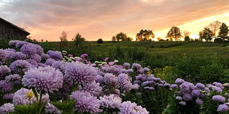 Sunset Yoga in the Flowers - with Andrea Caruso - Sept 17 tickets