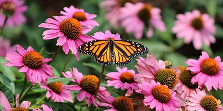 Staying Healthy and Well: AMAZING MONARCHS BOTANICAL GARDENS tickets