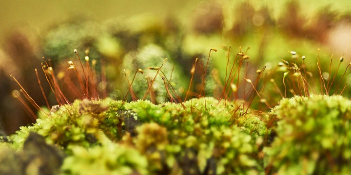 'Walking with Dinosaurs' - A Guided Walk on plant life before flowers. image