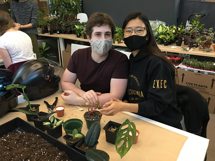 Enjoy a tasty latte and propagate some plant babies! image