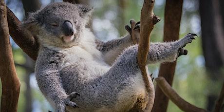 Aussie Wildlife Displays - POSTPONED tickets