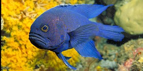 Teen Ranger - Snorkel Fish Count tickets
