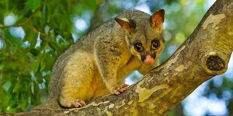 October School Holidays - Magic Possum Storytime - AusArk Visit (Ages 3-5) tickets