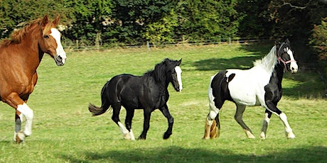 Healthy Grassland For Healthy Horses in the Calder Catchment tickets