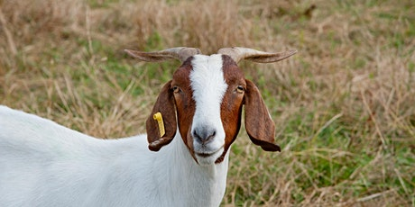 Stokes County Sheep and Goat Workshop tickets