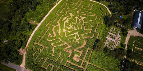The Amazing Maize Maze inspired by Andy Warhol's Cow tickets
