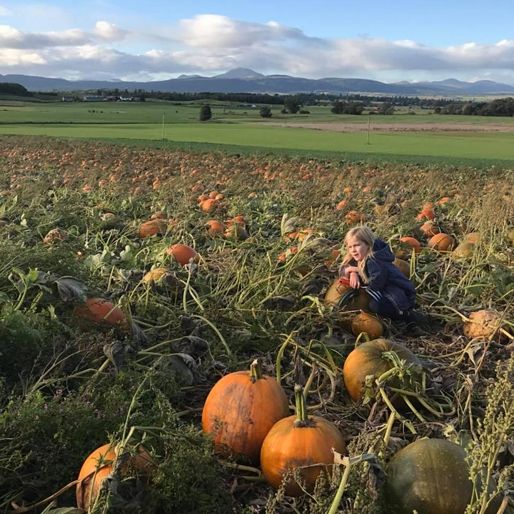 Arnprior Pumpkin Picking 2021 image