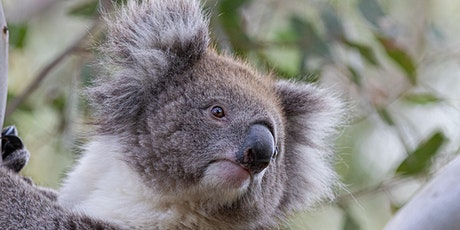 Gemtree Wines - Fauna and Flavours of Australia tickets